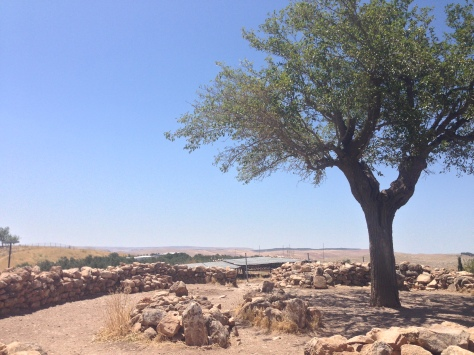 Burial place under a olive tree, dated much younger than the actual site.