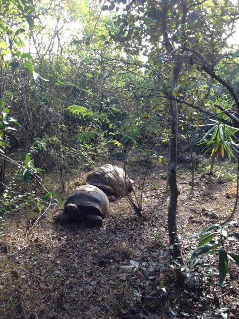 Naughty tortoises